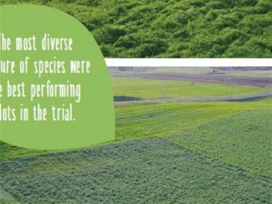 Mixed species cover crops