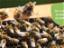 Improved management options for cucumber green mottle mosaic virus