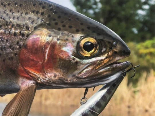 Freshwater Techniques